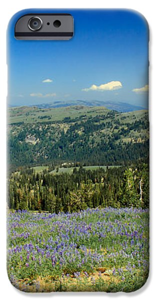 Vast View And Lupine iPhone Case by Robert Bales