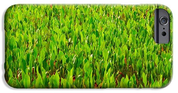 Florida Flowers Photographs iPhone Cases - Vegetation, Boynton Beach, Florida, Usa iPhone Case by Panoramic Images
