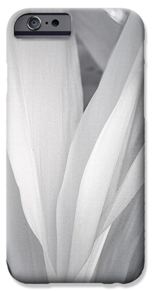 Flora iPhone Cases - Veil iPhone Case by Adam Romanowicz