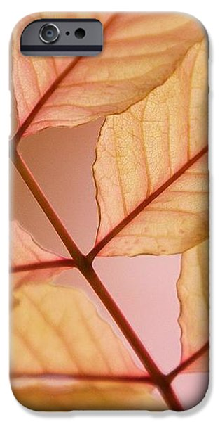 Veins iPhone Case by Andrew Brooks