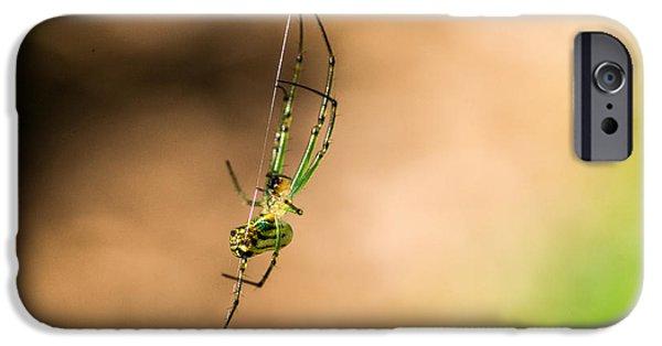 Arachnida iPhone Cases - Ventusa Orhard Spider 2 iPhone Case by Douglas Barnett