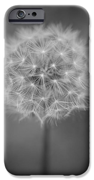 Weed Line iPhone Cases - Vermont-dandelion-puffball-Taraxacum officinale-black and white iPhone Case by Andy Gimino