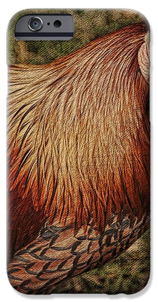 Vermont Rooster iPhone Case by Deborah Benoit