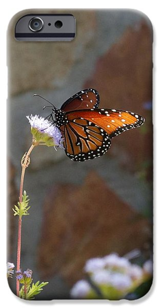 Hallmark Greeting Card iPhone Cases - Winery Vertical Butterfly and Flower iPhone Case by Kristina Deane