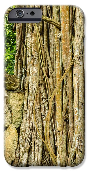 Gnarly iPhone Cases - Vertical Vines iPhone Case by Jess Kraft