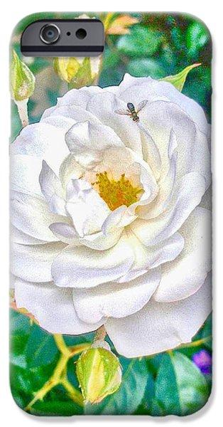 Hallmark Greeting Card iPhone Cases - HDR Vertical Bernardus Rose Bush iPhone Case by Kristina Deane
