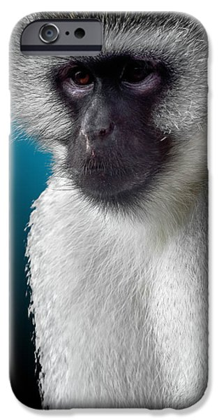 Gray Hair iPhone Cases - Vervet Monkey 2 iPhone Case by Brian Stevens
