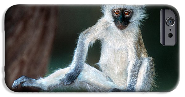 Red Eye iPhone Cases - Vervet Monkey Kenya Africa iPhone Case by Panoramic Images