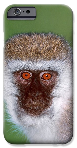 Strange iPhone Cases - Vervet Monkey Tanzania Africa iPhone Case by Panoramic Images