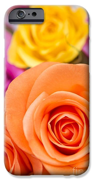 Rosaceae iPhone Cases - Very Bold Bunch iPhone Case by Anne Gilbert