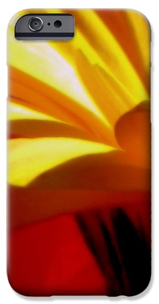 Vibrance  iPhone Case by KAREN WILES