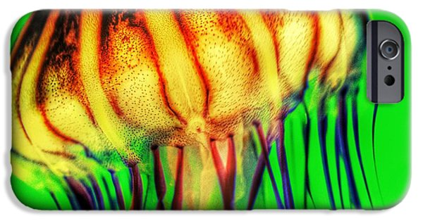 Tentacles iPhone Cases - Vibrant Jellyfish iPhone Case by Marianna Mills