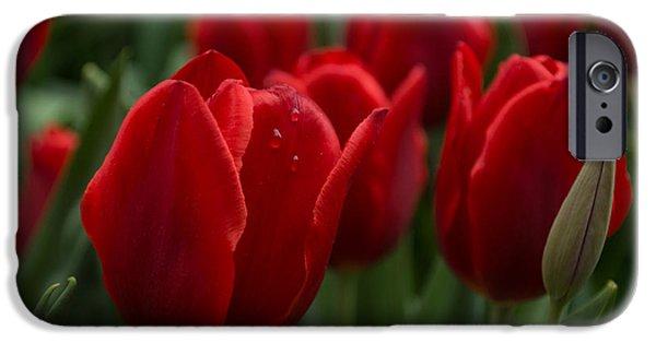 Ruby Garden Jewel iPhone Cases - Vibrant Red Spring Tulips iPhone Case by Georgia Mizuleva