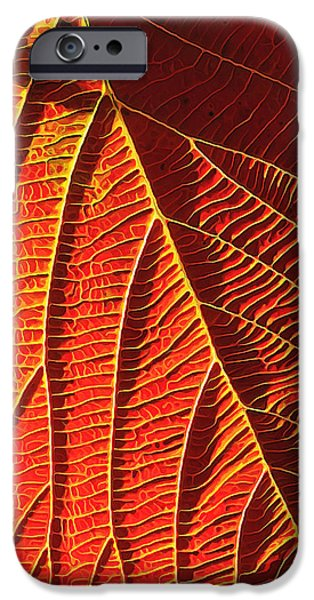 Fall Photos iPhone Cases - Vibrant Viburnum iPhone Case by Bill Caldwell -        ABeautifulSky Photography