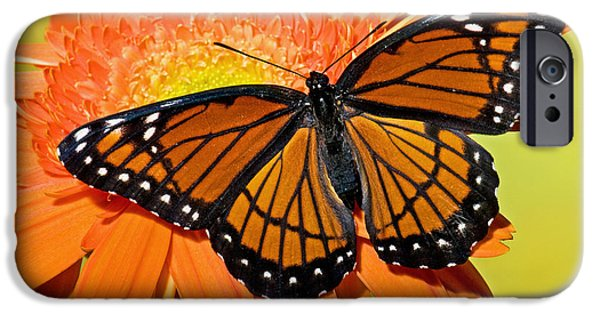 Florida Wildlife iPhone Cases - Viceroy Butterfly iPhone Case by Millard H. Sharp