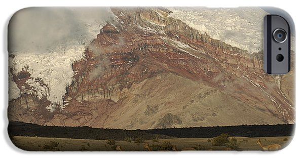 Chimborazo iPhone Cases - Vicuna Herd Grazing At Mt Chimborazo iPhone Case by Pete Oxford