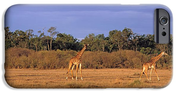 Masai Mara Photographs iPhone Cases - View Of A Group Of Giraffes In The iPhone Case by Panoramic Images
