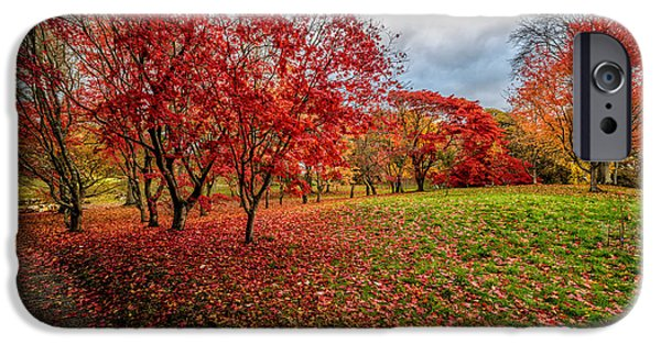 Fall Bushes iPhone Cases - View of Autumn iPhone Case by Adrian Evans