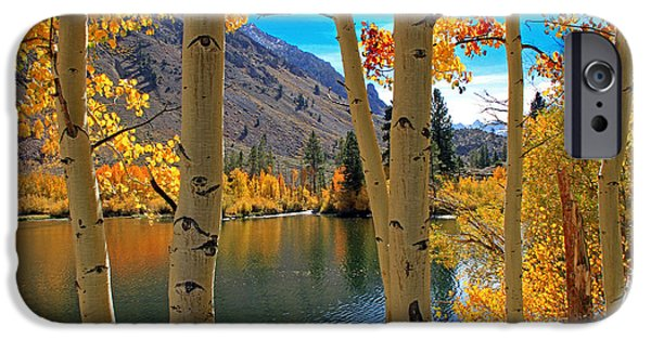 Fall iPhone Cases - View Through the Aspens iPhone Case by Donna Kennedy