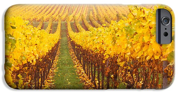 Crops iPhone Cases - Vine Crop In A Vineyard, Riquewihr iPhone Case by Panoramic Images