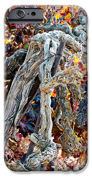 Grapevine Red Leaf iPhone Cases - Vine in autumn iPhone Case by Arik Baltinester