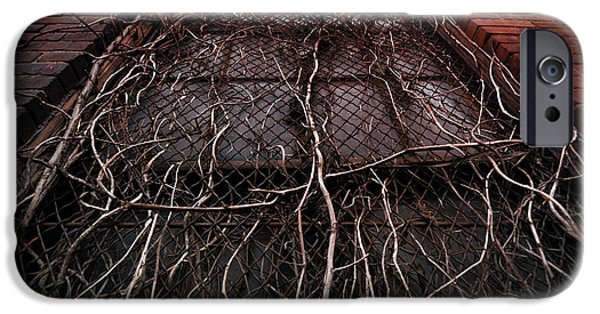 Overruns iPhone Cases - Vine of Decay 1 iPhone Case by Amy Cicconi