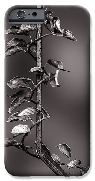 Vine on Iron iPhone Case by Bob Orsillo