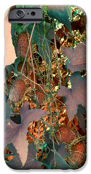 Vine Leaves iPhone Cases - Vines and Things iPhone Case by Joanne Smoley