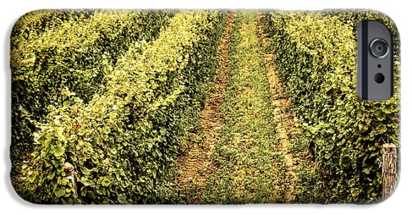 Vineyard Landscape iPhone Cases - Vines growing in vineyard iPhone Case by Elena Elisseeva