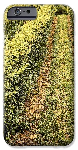 Vines growing in vineyard iPhone Case by Elena Elisseeva