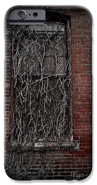 Overruns iPhone Cases - Vines of Decay iPhone Case by Amy Cicconi