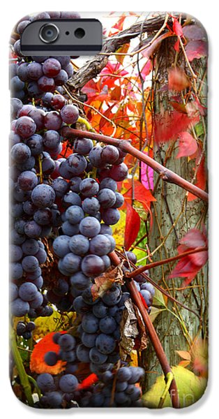 Concord Grapes iPhone Cases - Vines Of October iPhone Case by Roger Bailey