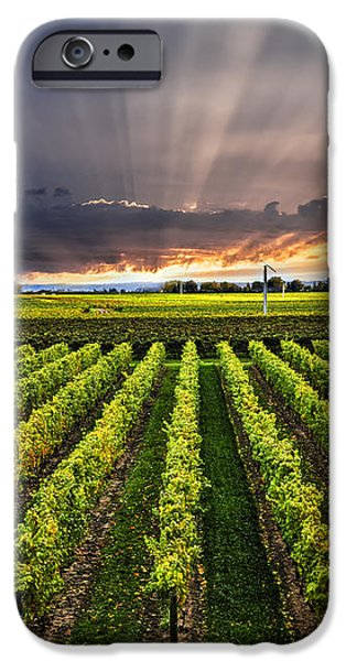 Vineyard Landscape iPhone Cases - Vineyard at sunset iPhone Case by Elena Elisseeva