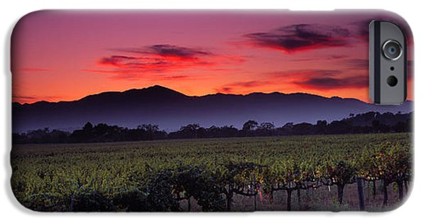 Winery Photography iPhone Cases - Vineyard At Sunset, Napa Valley iPhone Case by Panoramic Images