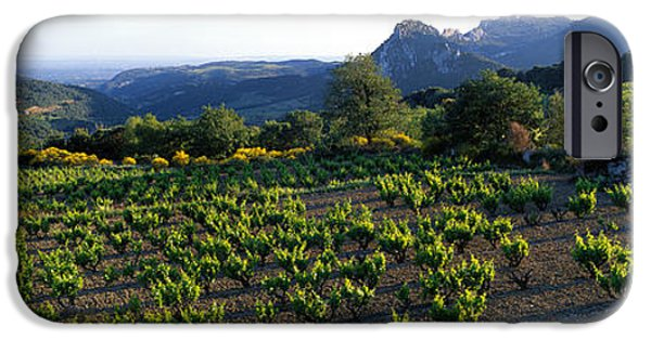 Grapevines iPhone Cases - Vineyard Dentelles De Montmirail iPhone Case by Panoramic Images