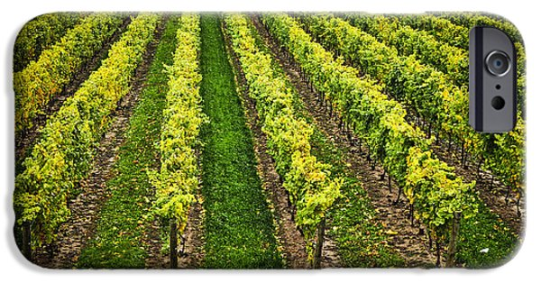 Grape Vineyard iPhone Cases - Vineyard iPhone Case by Elena Elisseeva