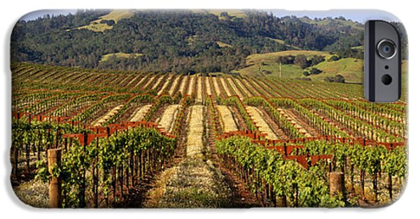 Winery Photography iPhone Cases - Vineyard, Geyserville, California, Usa iPhone Case by Panoramic Images