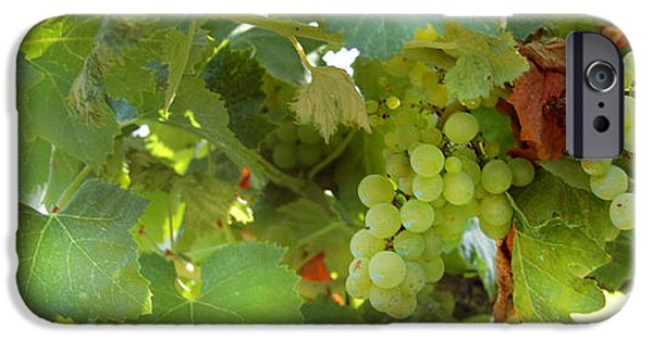 Grapes iPhone Cases - Vineyard iPhone Case by Gina Dsgn