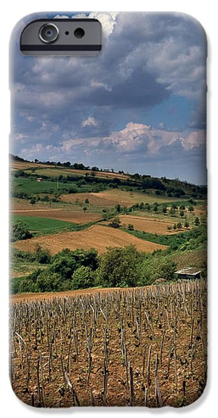 Vineyard in Frushka Gora. Serbia iPhone Case by Juan Carlos Ferro Duque