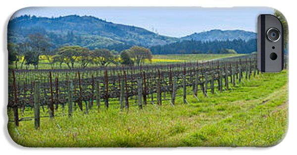 Sonoma iPhone Cases - Vineyard In Sonoma Valley, California iPhone Case by Panoramic Images