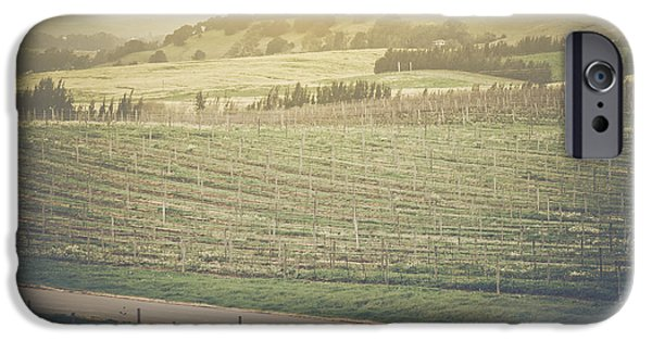 Grapevine Red Leaf iPhone Cases - Vineyard in Spring with Vintage Instagram Film Style Filter iPhone Case by Brandon Bourdages