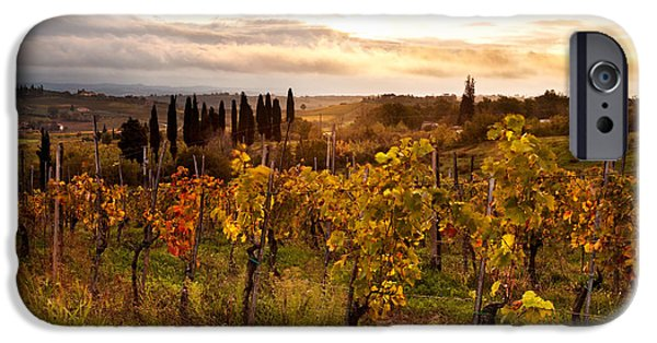 Vineyard Prints iPhone Cases - Vineyard in Tuscany iPhone Case by Matteo Colombo