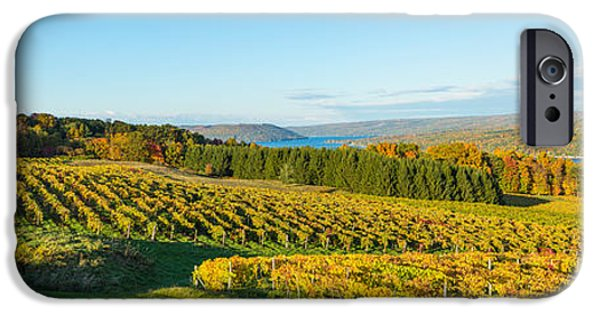 Rural iPhone Cases - Vineyard, Keuka Lake, Finger Lakes, New iPhone Case by Panoramic Images