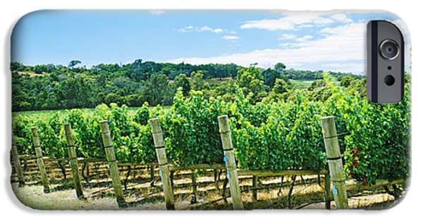 Margaret iPhone Cases - Vineyard, Margaret River, Western iPhone Case by Panoramic Images