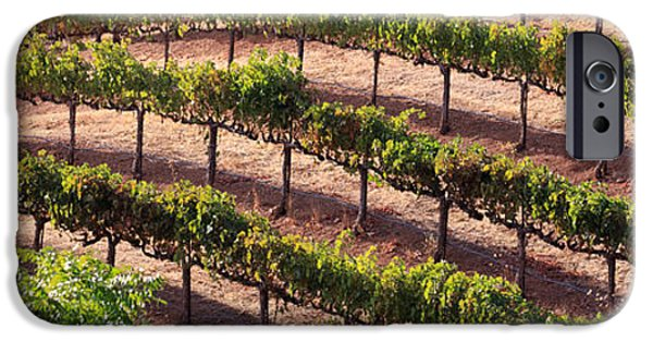 Red Wine iPhone Cases - Vineyard iPhone Case by Mariusz Blach