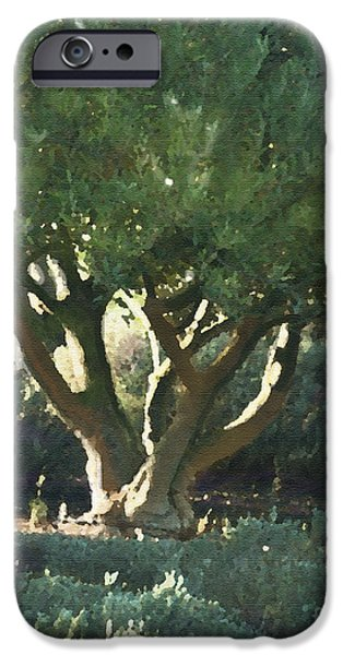 Vineyard Olive iPhone Case by Artist and Photographer Laura Wrede