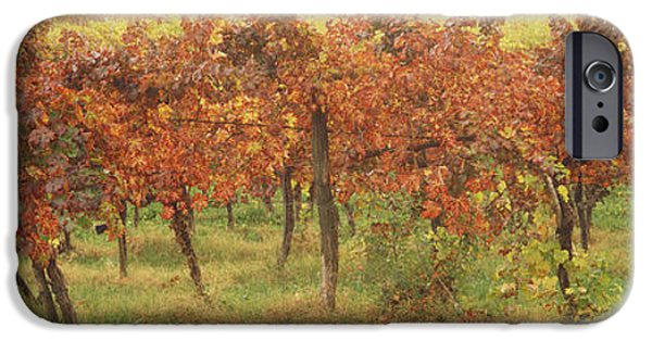 Viticulture iPhone Cases - Vineyard On A Landscape, Apennines iPhone Case by Panoramic Images