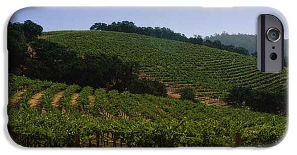 Vineyard In Napa iPhone Cases - Vineyard On A Landscape, Napa Valley iPhone Case by Panoramic Images