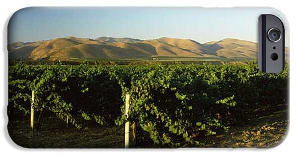 Santa iPhone Cases - Vineyard On A Landscape, Santa Ynez iPhone Case by Panoramic Images