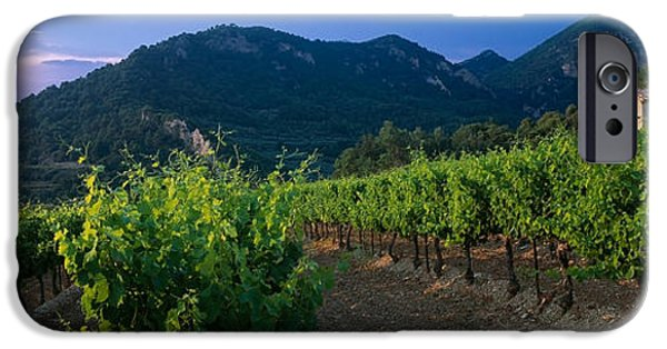 Winery Photography iPhone Cases - Vineyard, Provence-alpes-cote Dazur iPhone Case by Panoramic Images